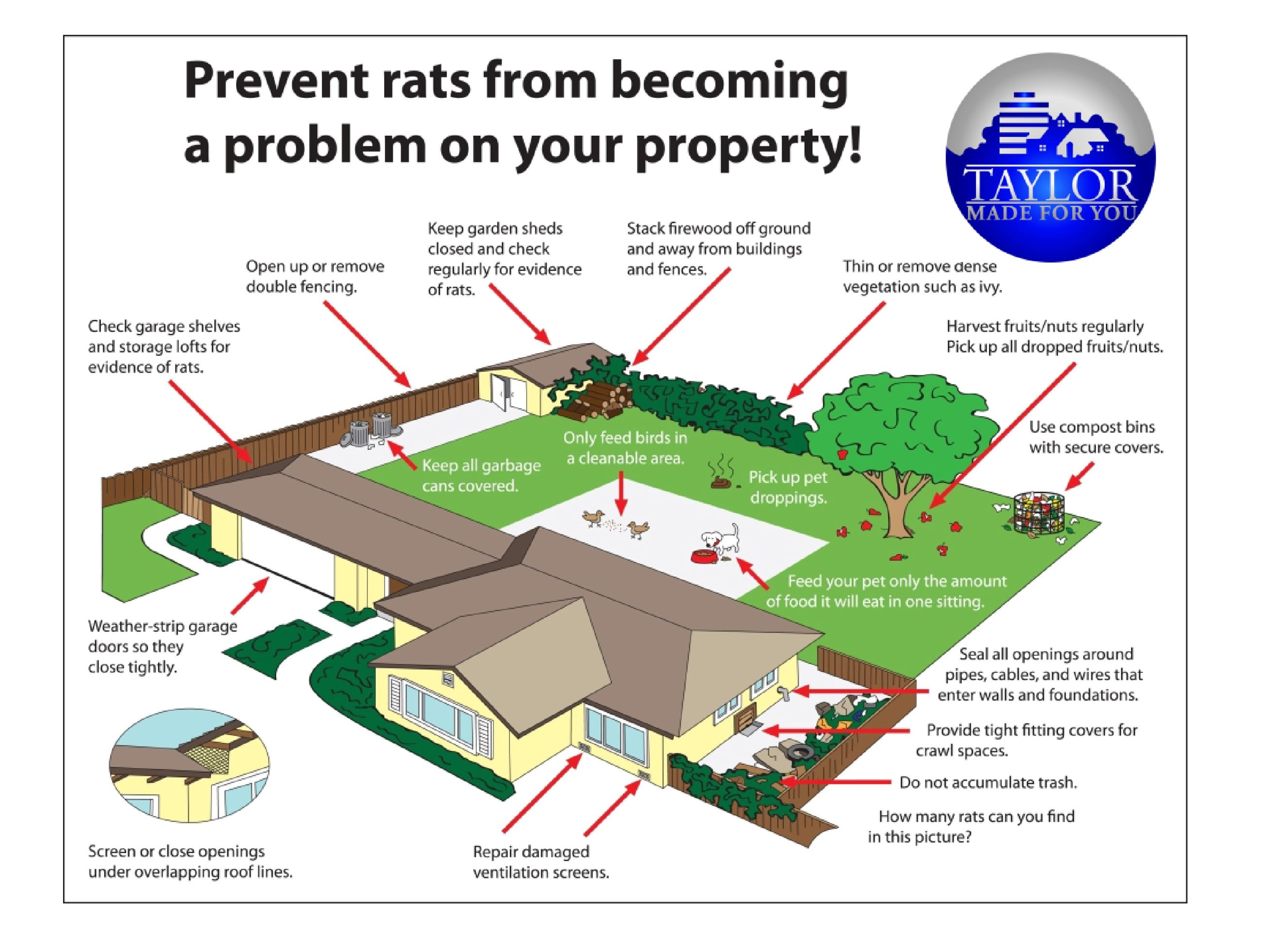RAT PREVENTION TAYLOR VERSION